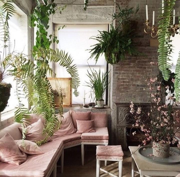 Květiny v obývacím pokoji